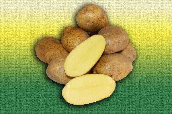 Картофель Эльмундо