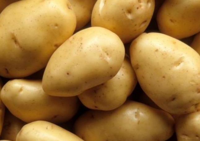 Характеристика картофеля сорта Янка