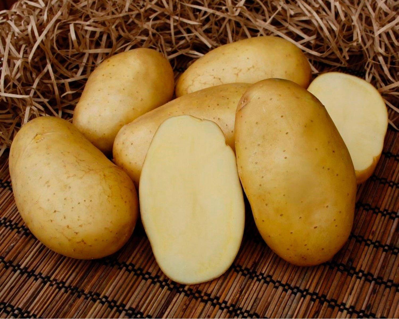 название сортов картофеля с картинками команда вышла