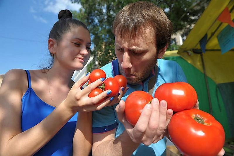 Бор для томатов