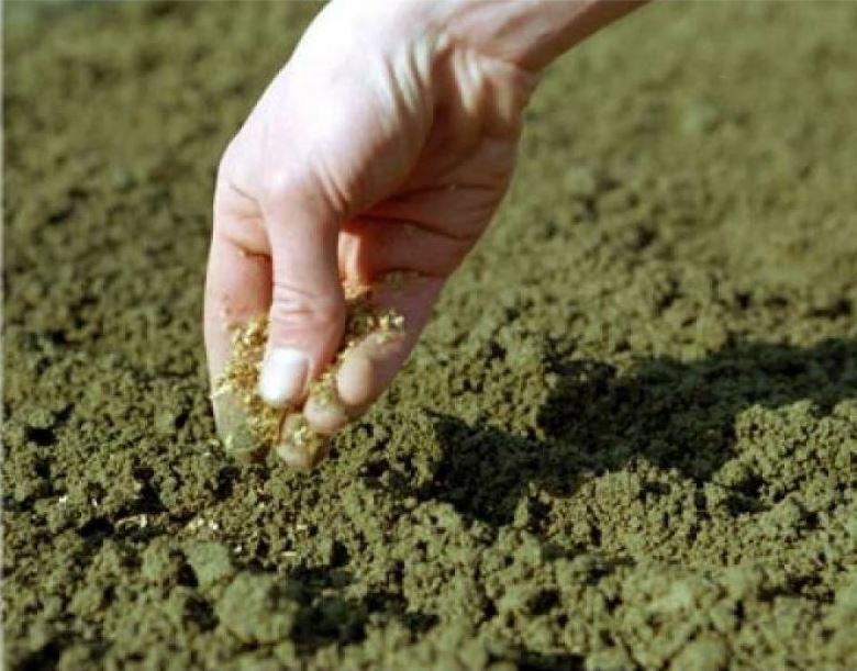 Посадка семенами в открытый грунт