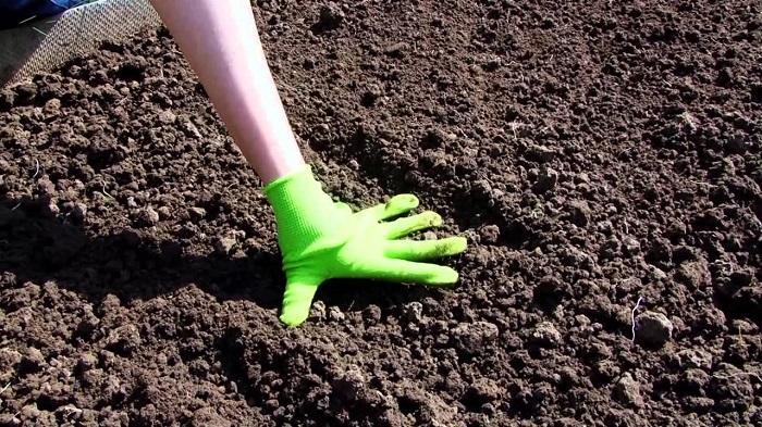 Подготовка грядок для посадки семян