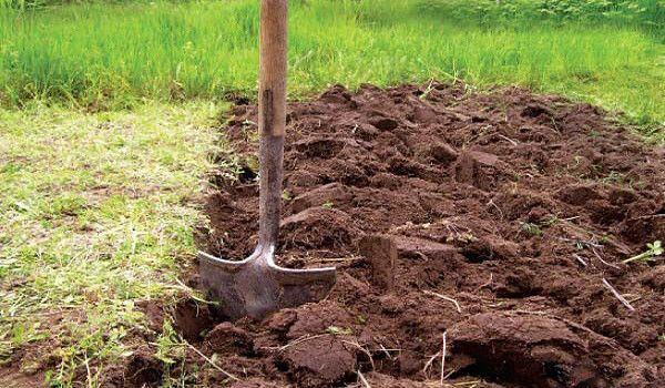 Перекопка почвы под посадку крыжовника