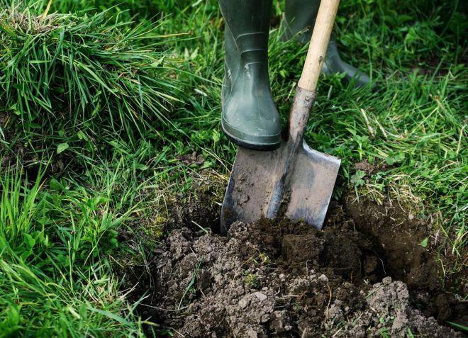 Подготовка почвы к посадке голубики