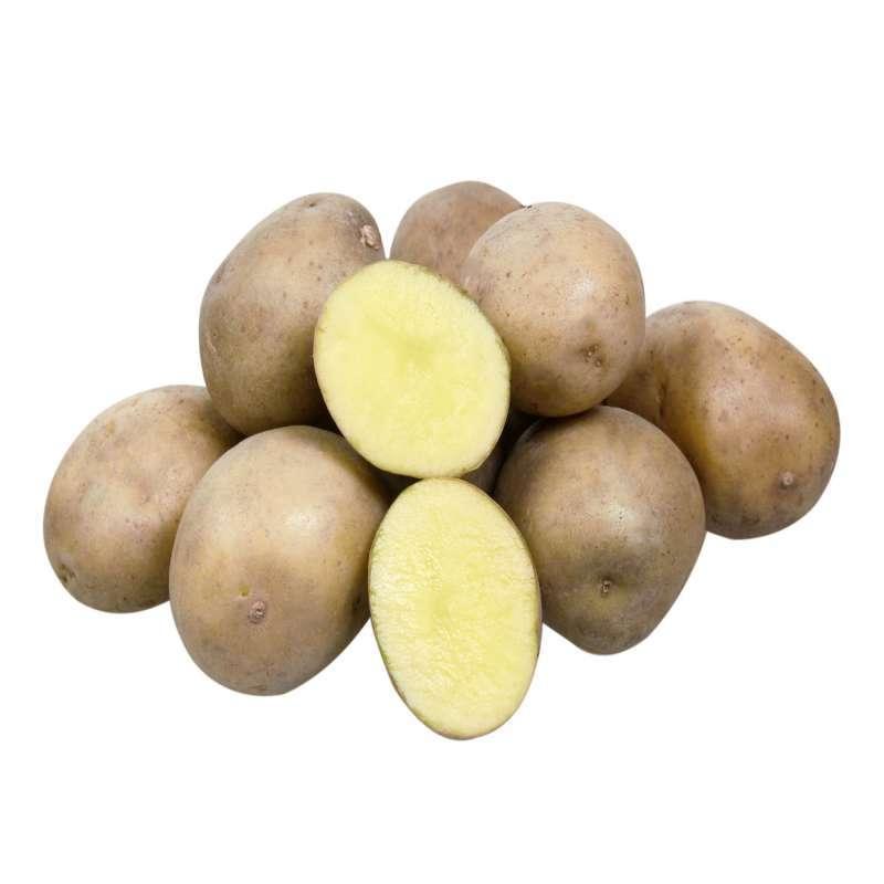 пришлось картофель уладар описание сорта фото отзывы десктопная