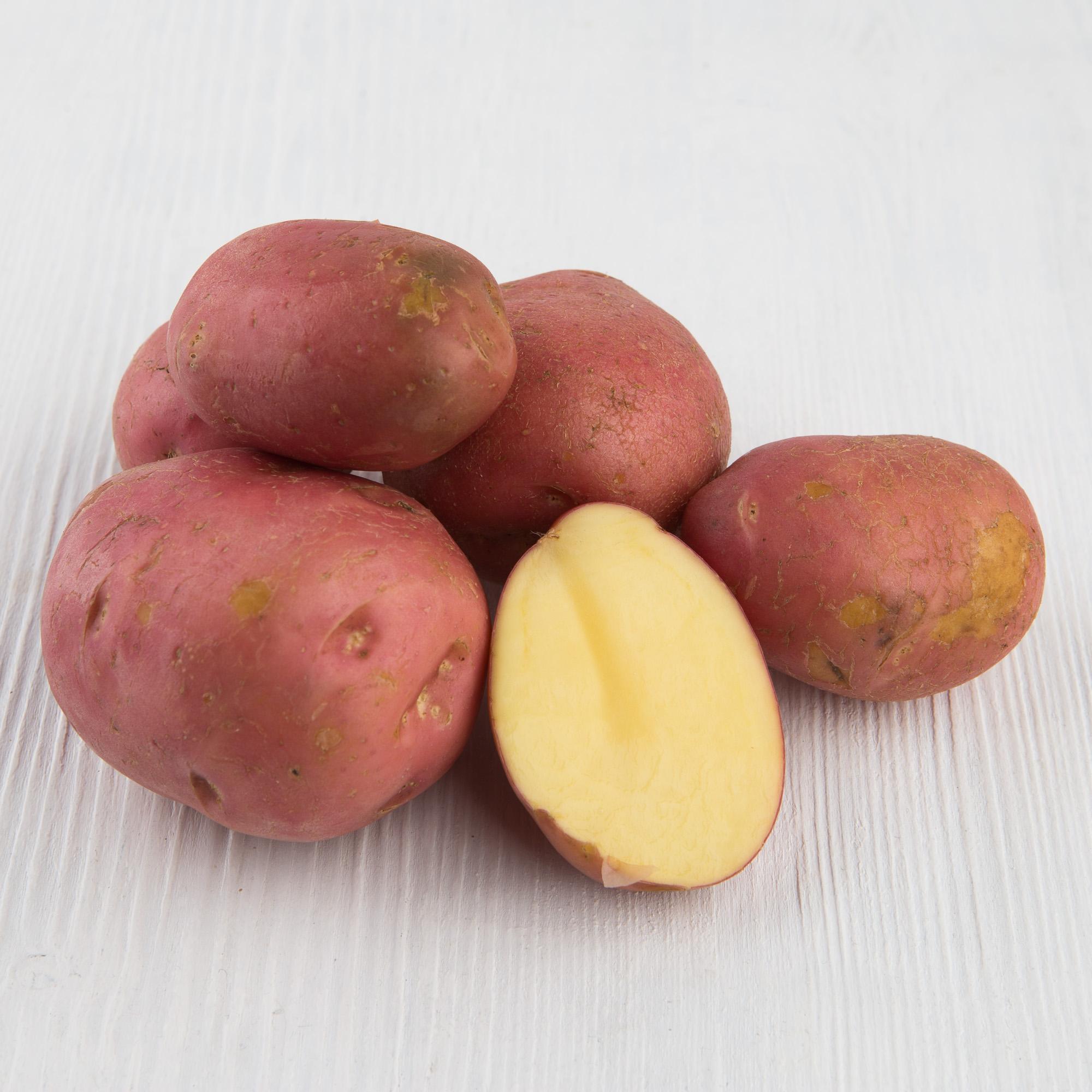 сорта картофеля фото описание очень разваристый раз