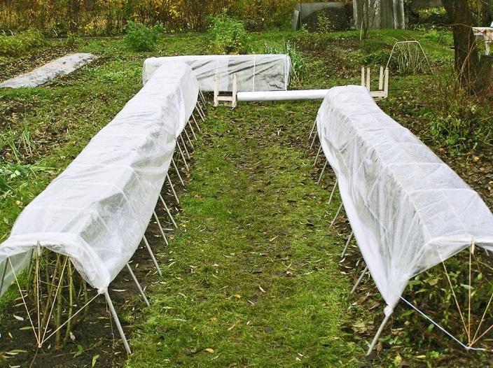 Подготовка малины к зимнему периоду времени