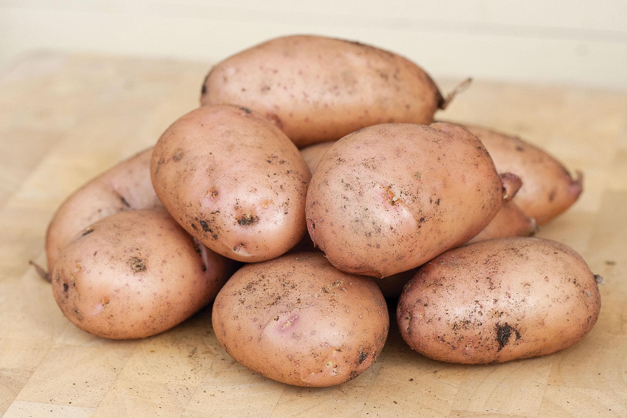 Жуковский ранний позволяет получить ультраранний урожай картофеля, который пригоден для длительного хранения