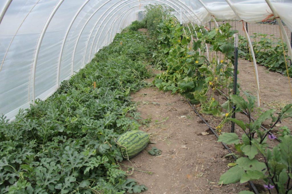 Бизнес план выращивание арбузов 89