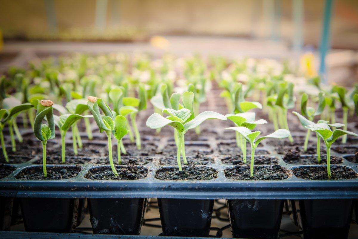Для семян главное правильно подготовить грунт