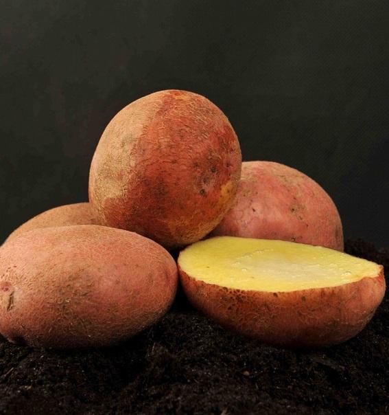 Картофель сорта Журавинка