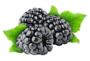 Ежевика – ягода, просто потрясающая как на вид, так и на вкус
