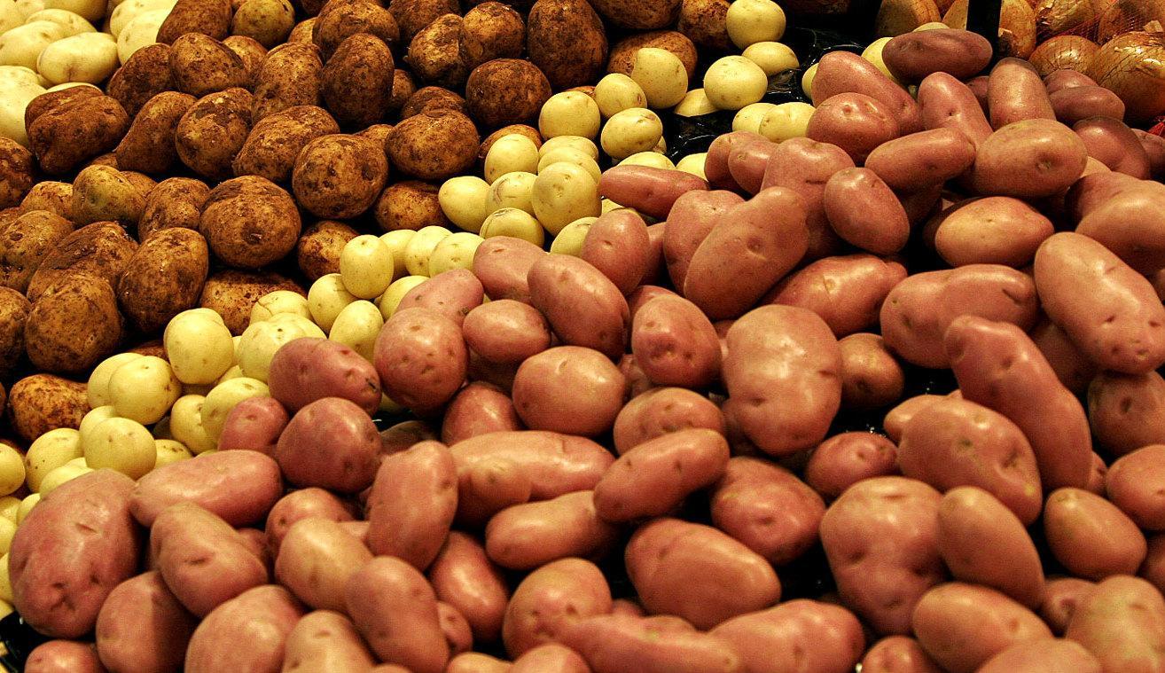 Картофель – популярная в нашей стране культура