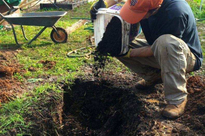 Агротехника начинается с подготовки почвы под посадку малины