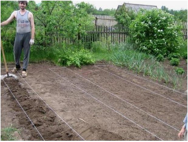 Подготовка огорода под высадку картошки