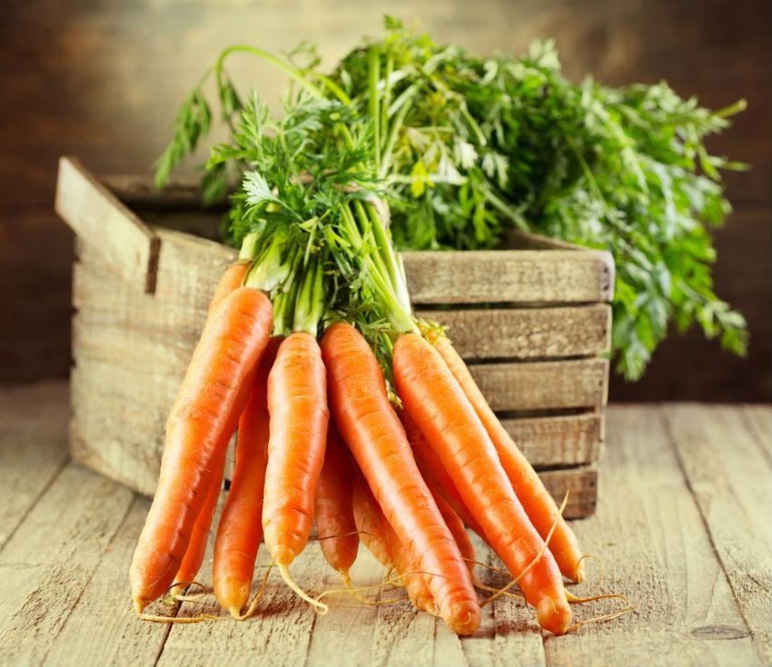Правильная посадка моркови под зиму