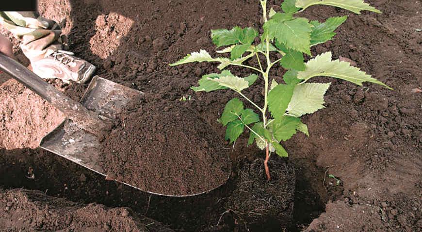 Кустовой метод посадки