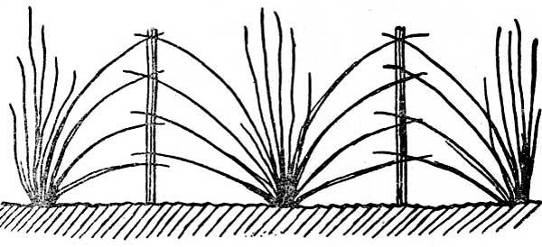 Принцип веерной подвязки