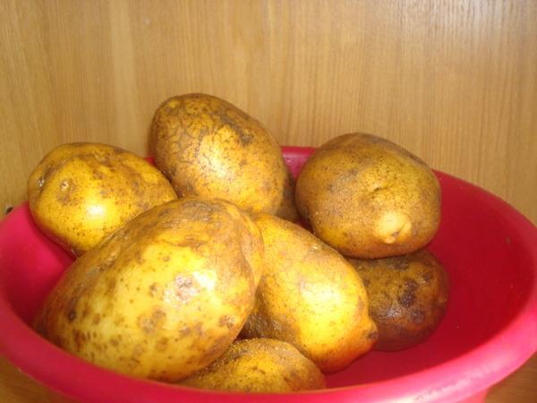Картофель Винета, общий вид