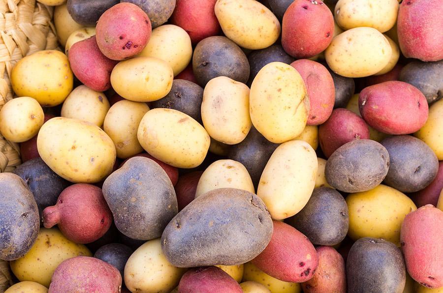 Картошка – основа вкусного и сытного рациона, поэтому она должна занимать особое место на огороде
