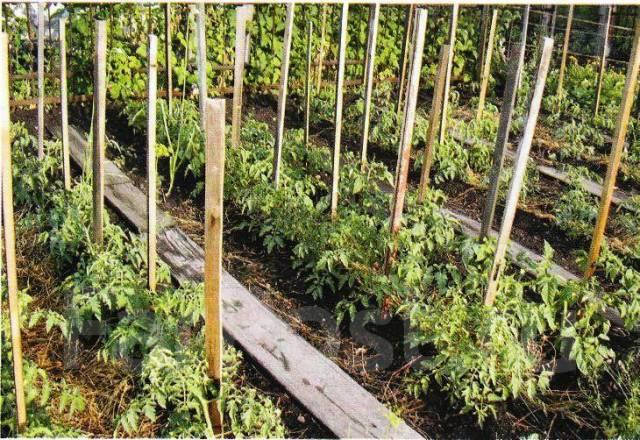 Как подвязывать помидоры в теплице и открытом грунте: лучшие способы с фото