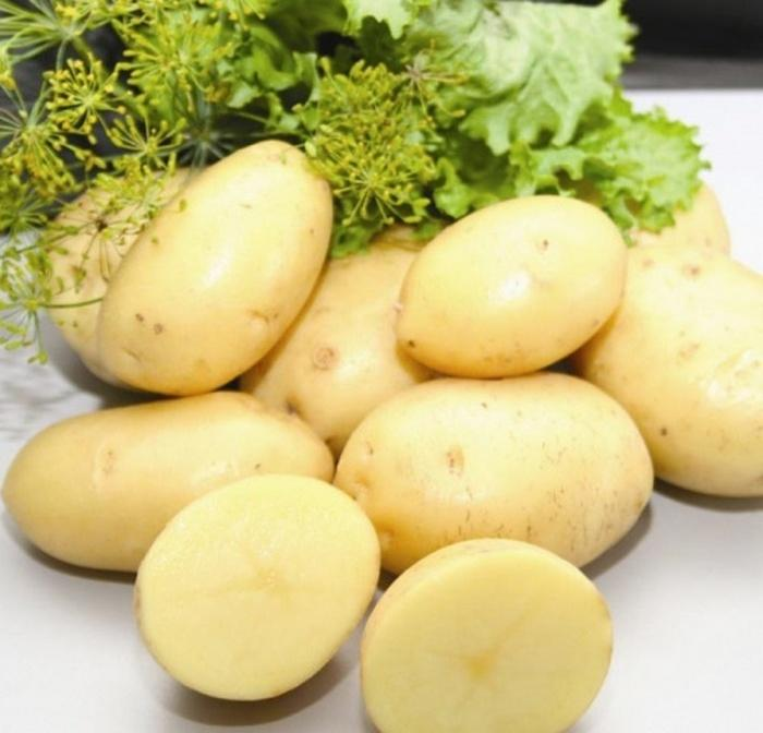Картофель Ред Леди описание и характеристика сорта урожайность с фото