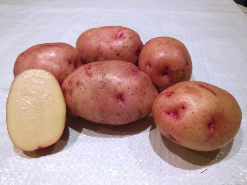 Жуковский – картофель, любимый многими огородниками в стране