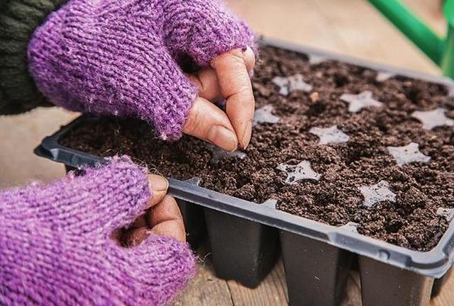 Томат грибное лукошко отзывы фото урожайность — Сайт о даче