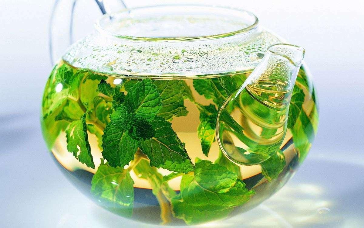 Чай из меллисы