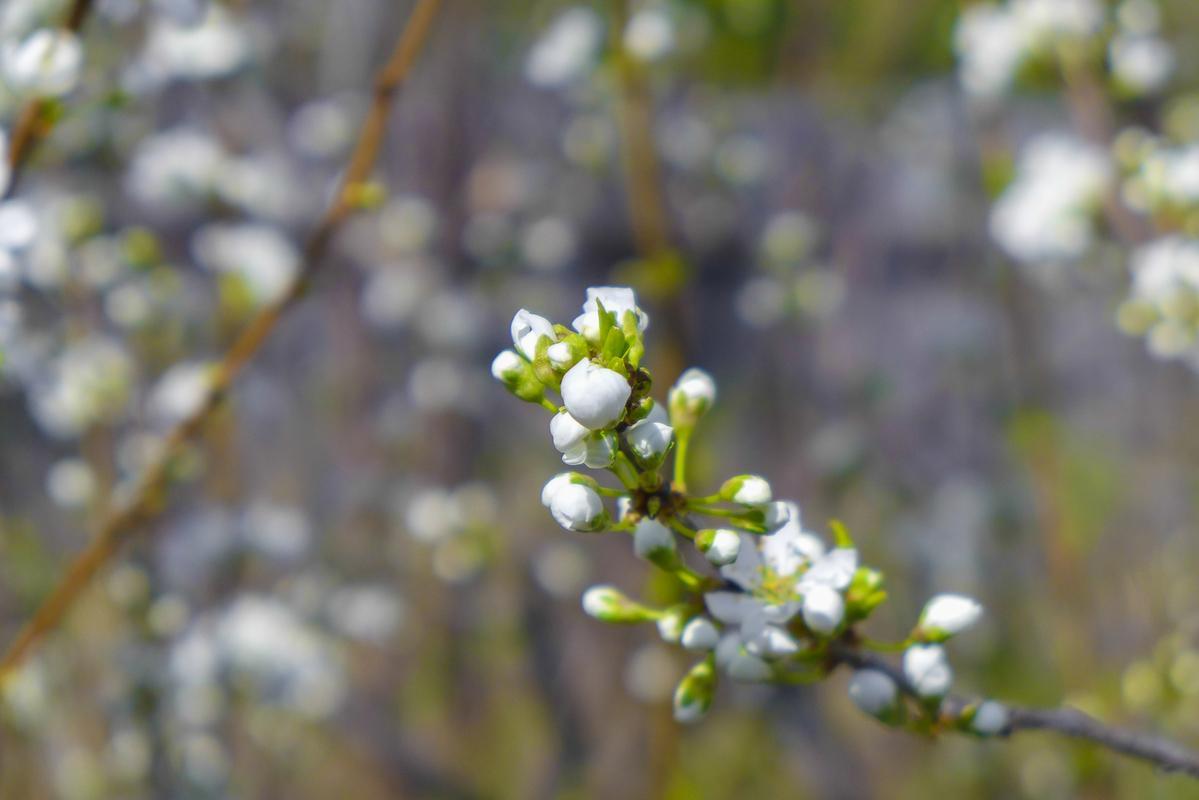 Цветение деревьев- начало третьего этапа