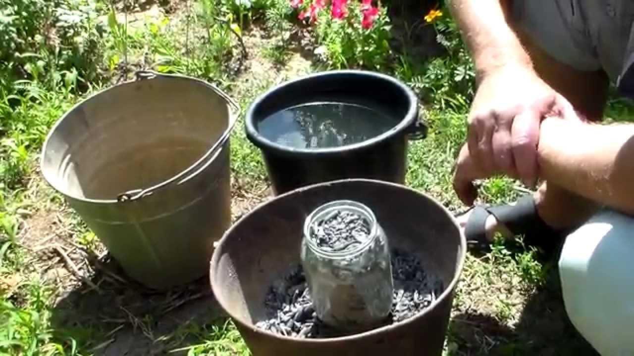 Обработка лука севка перед посадкой весной керосином