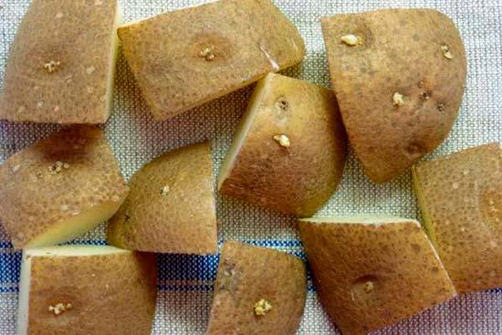 Можно ли сажать крупный картофель