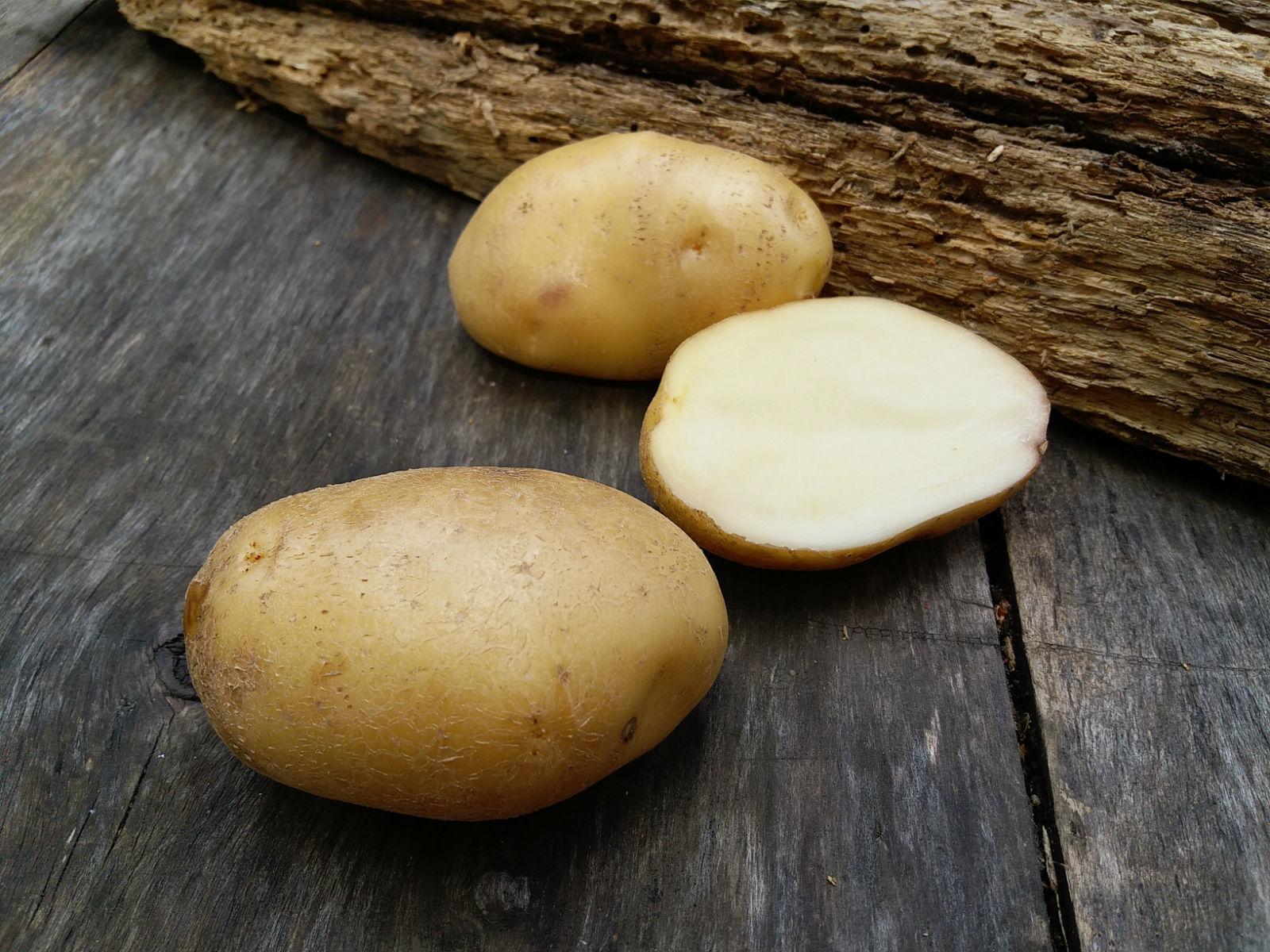 Картофель Лорх обладает приятным вкусом