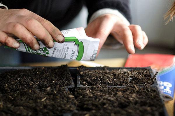 Стимуляторы роста для рассады томатов