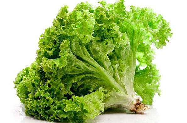 Как правильно сажать салат листовой