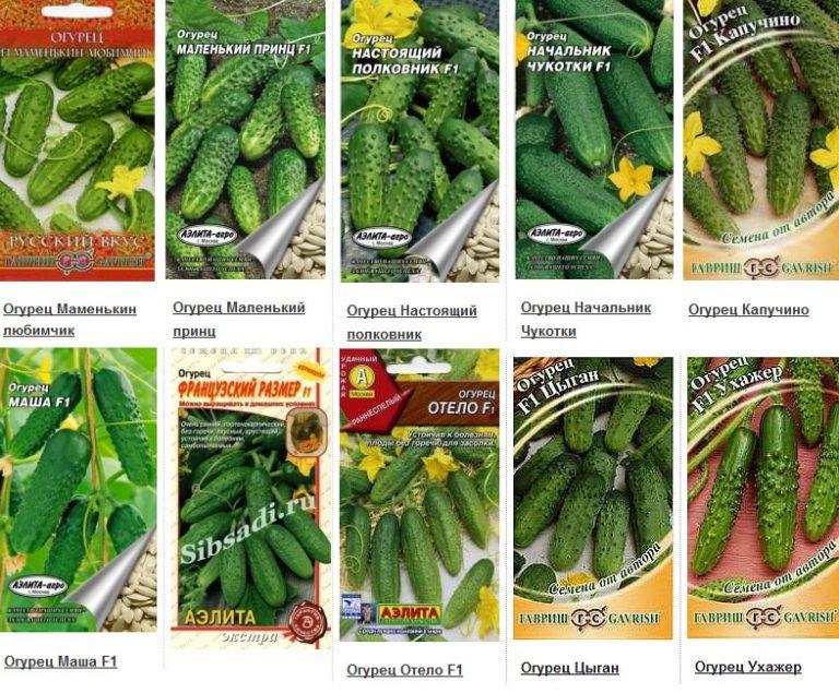 самые лучшие семена огурцов для теплицы