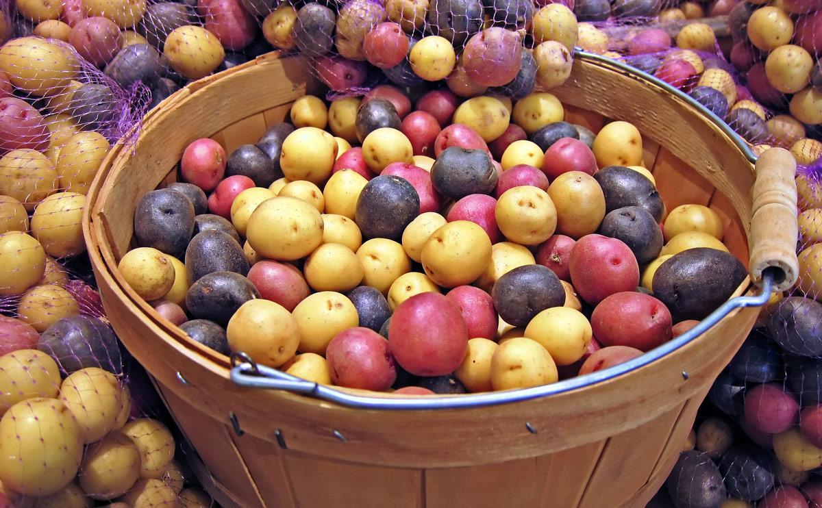 Сорта картофеля бывают разные