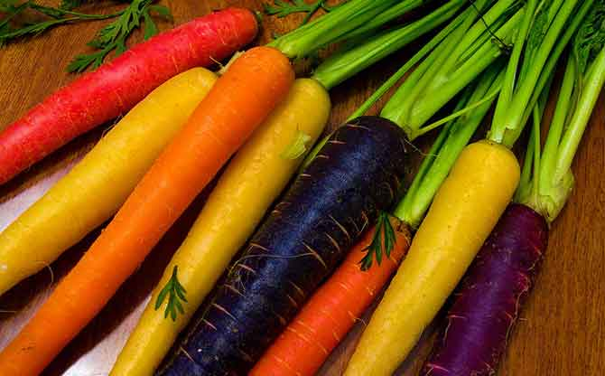 Сорта моркови для подзимнего посева в подмосковье