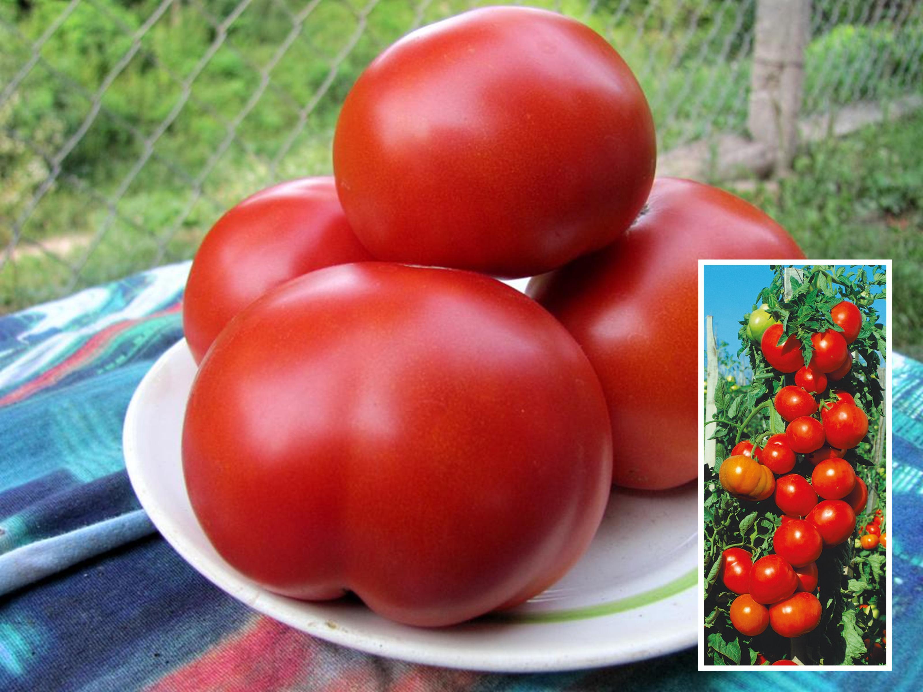 Томат Мармелад желтый описание и характеристика сорта урожайность с фото