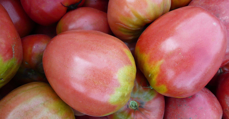 Томат Пудовик имеет крупные плоды