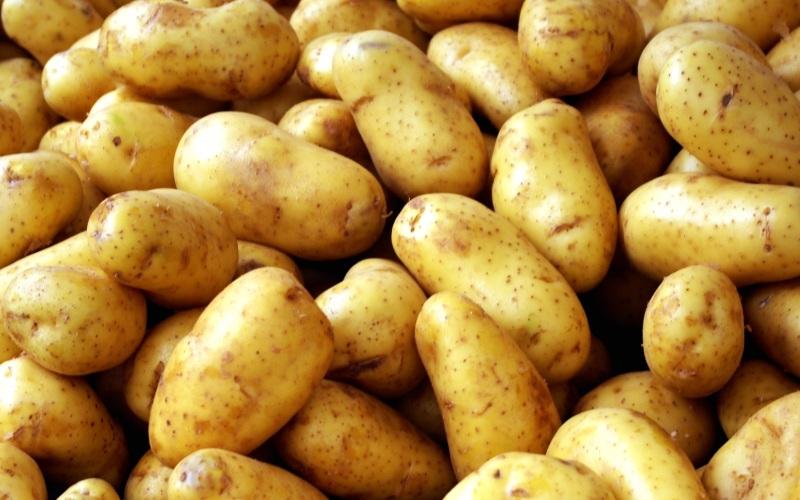 Картофель сорта Каратоп характеристика и описание болезни и вредители