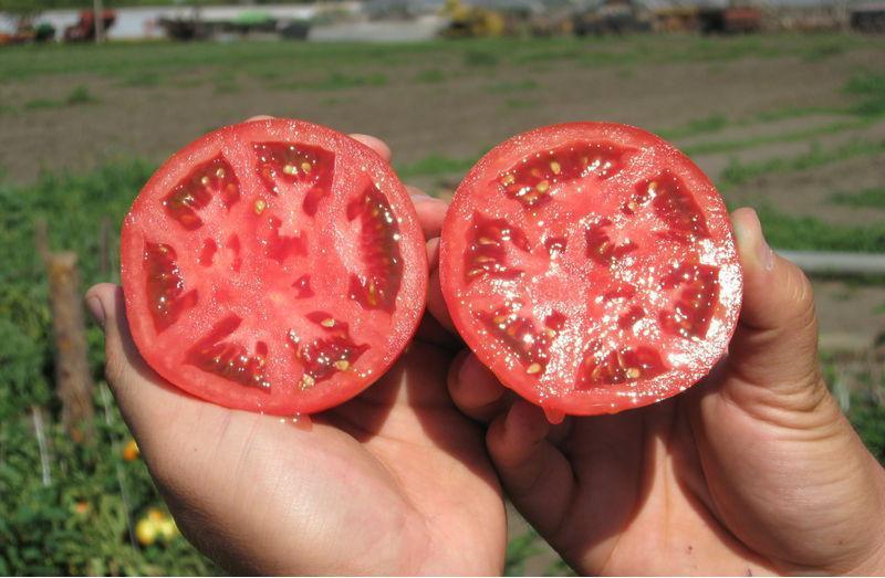 Какие семена помидор лучше для открытого грунта
