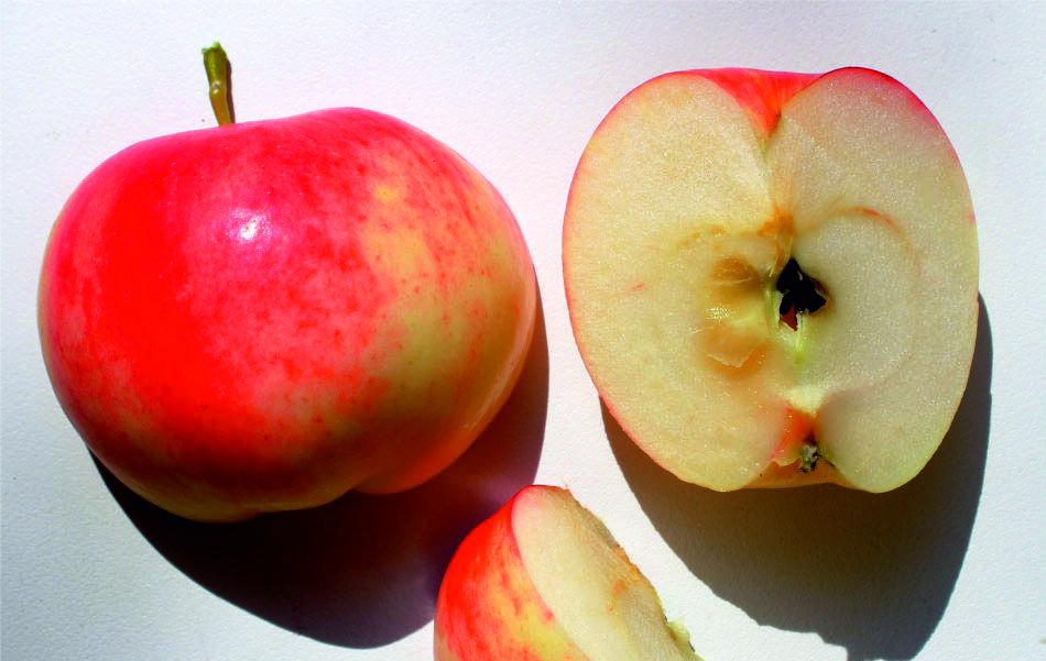 Яблоня Мантет сладость уходящего лета