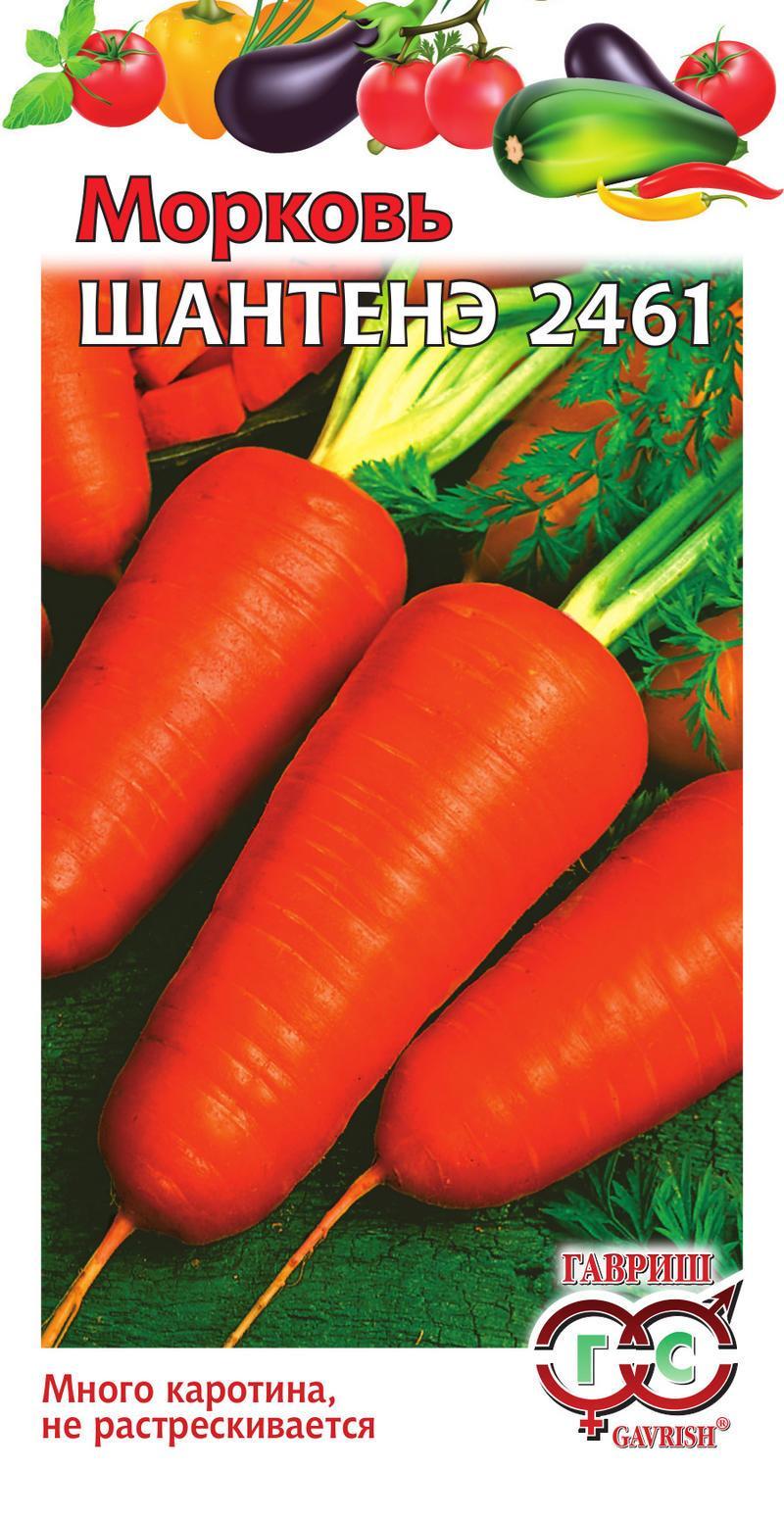 Голландские семена моркови