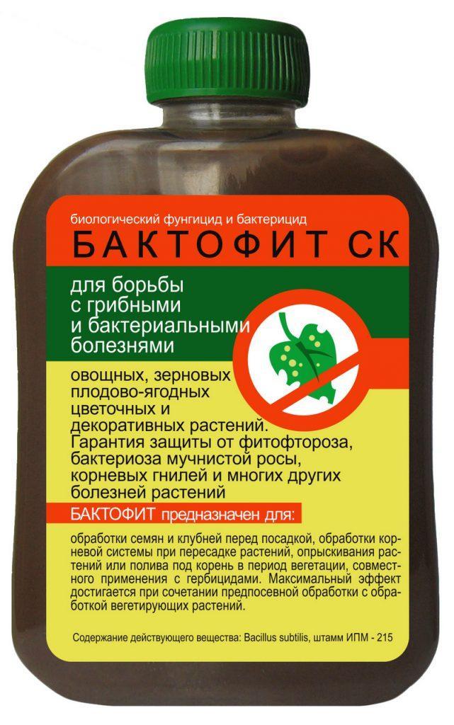 Томат Сибирский скороспелый: характеристика и описание сорта, урожайность с фото и видео