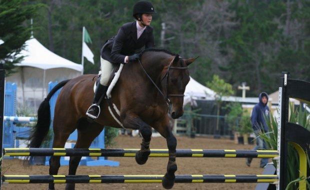 Какую скорость может развить конь