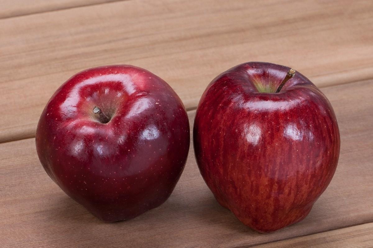 Характеристика перспективного сорта яблони Ред Делишес