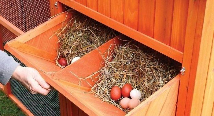 Что делать если куры несут мелкие яйца