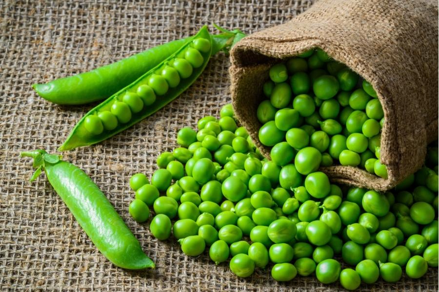 Как садить горошек зеленый