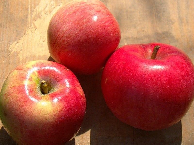 фото сорта яблок суйслепское подземке продолжают